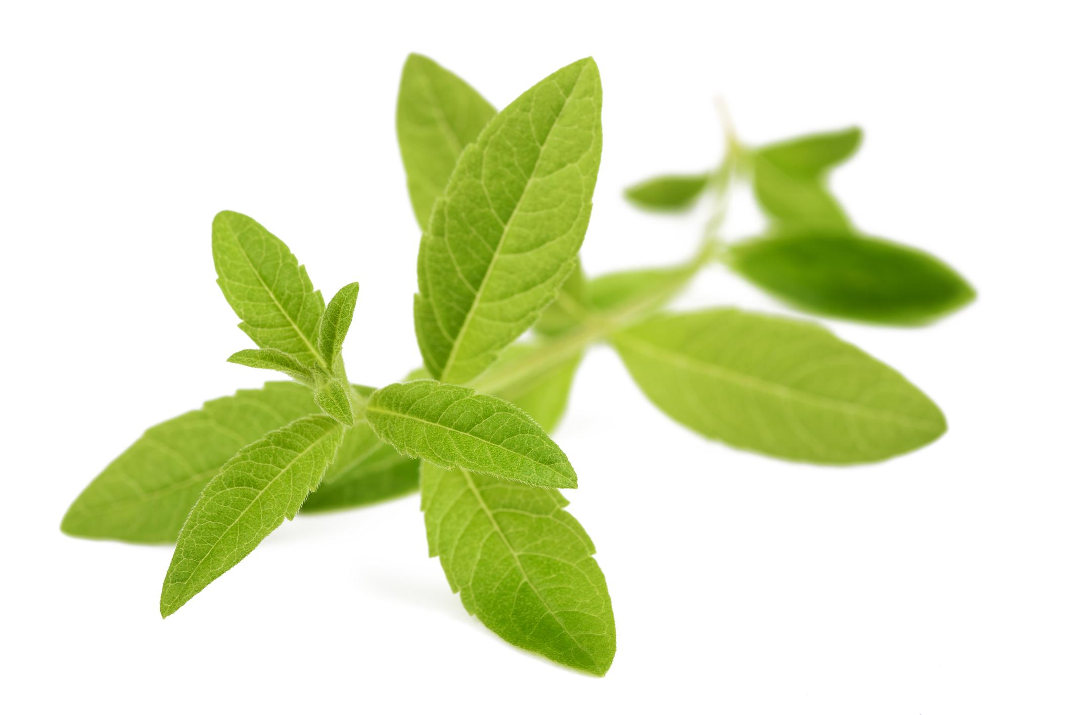 La verveine odorante, produits cosmétique